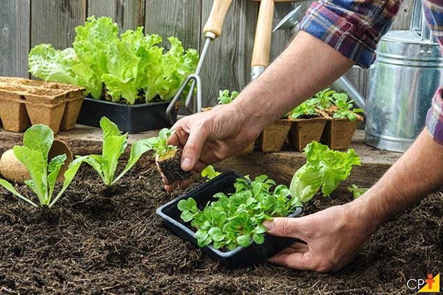 cultivo horta caseira